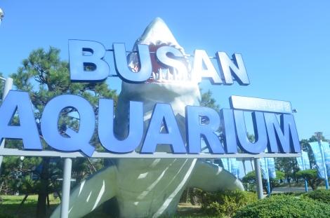 Busan Aquarium.