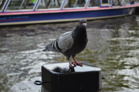 Random bird in Hard Rock.