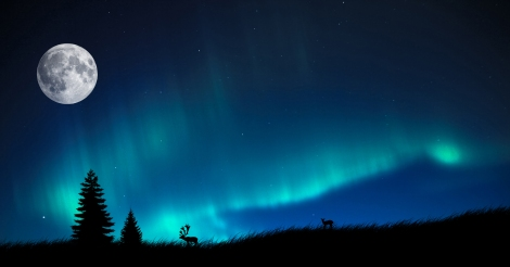 Aurora Borealis (Northern Lights) - Witnessed this amazing phenomenon multiple times there.