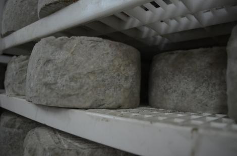Moldy cheese!
